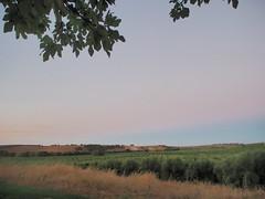 P8040452 (Matt Lancashire) Tags: portugal alentejo valedofreixo montedoramalho dusk sunset fields olive