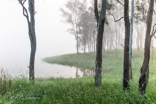 Winter fog - Lake Tinaroo
