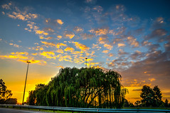 Sunrise Colors, Johannesburg (Paul Saad) Tags: sunset surise johannesburg color colours hdr clouds street nikon trees outdoor sky cloud dusk serene skyline field landscape