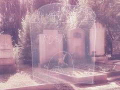 Roe Pink - Deer on a Grave / Lotti`s drawing of her new Schoolbag - Reh rosa - unterwegs am Zentralfriedhof 27. August 2016 / Lottis (6 Jahre) Zeichnung ihrer neuen Schultasche (hedbavny) Tags: fauna tierwelt tier animal reh roe deer sugetier wildtier wildlife natur nature friedhof cemetery graveyard grave grab grabstein tomb tombstone gravestone wald tree baum forest rosa pink green grn weis white licht light sonne sun sonnenlicht schatten shadow sommer summer freizeit leisure schrift schriftzeichen rune elhaz todesrune esoterik buchstabe letter unterwegs rundgang runde spaziergang zentralfriedhof simmering zeichnung drawing kind child girl mdchen wien vienna austria sterreich hedbavny ingrid