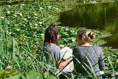 In the footsteps of Claude Monet? (David Lev) Tags: denmark copenhagen botaniskhave botanicgardens pond waterlilies paintinginnature