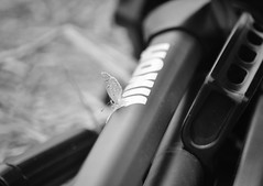 (Sersio_Photographer) Tags: mariposas corua del conde fotografodecoruadelconde
