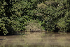 untitled (robwiddowson) Tags: river thames oxford nature outdoors natural trees photo photograph photography image picture robertwiddowson