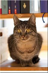 Katze im Regal (Christian Jena) Tags: cat katze regal miez