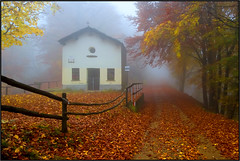 Autumn Mist (beppeverge) Tags: autumn trees mist fall leaves fog foglie alberi woods fav50 fav20 nebbia magical forests magico valsesia fav10 magicallight montetovo bestevergoldenartists creativephotocafe