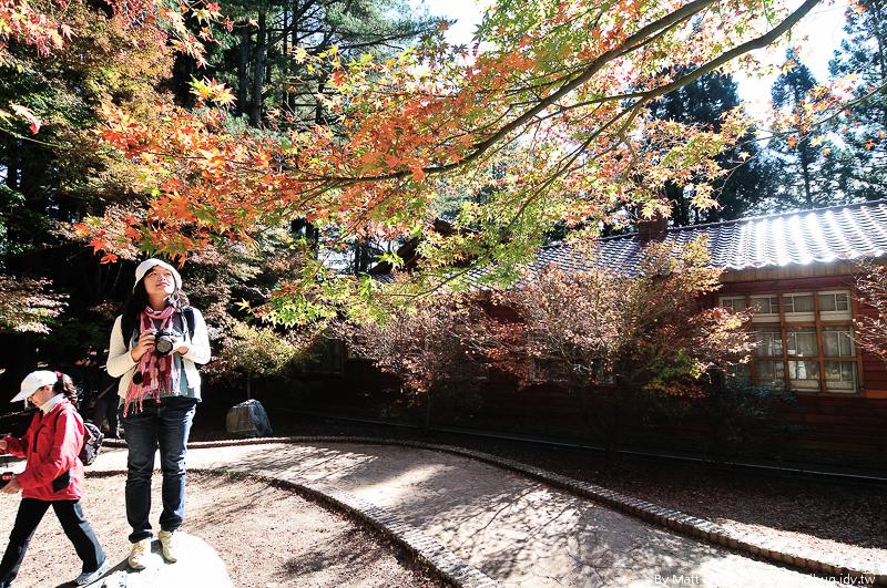 福壽山農場楓紅-33
