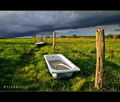 Bathtubs in a fied for the cows under a dramatic sky (lathuy) Tags: sunset sky storm green field clouds grey cows champs dramatic vert ciel bathtub piquets mygearandme