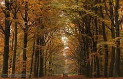 Maashorst, Uden (hknatuurfoto (Hans Koster)) Tags: morning autumn light mist cold netherlands colors fog forest licht herfst foggy nederland bos ochtend uden koud kleuren ultimateshot maashorst