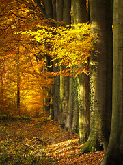 Egheria (Erik Bethlehem) Tags: herfst laan natuurmonumenten delutte beuk beukenlaan egheria
