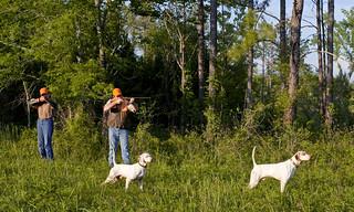 Alabama Quail Hunt - Davis Quail 27