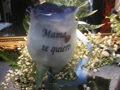 Rosa azul a domicilio con tatuaje en el petalo (1) (Graficflower) Tags: rosas azules rosaazul rosasazules floresadomicilio rosasadomicilio ramosdefloresadomicilio floristeriaadomicilio floristeriaonline
