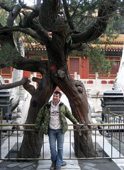 Cedars In Love, Imperial Garden (andywalker1) Tags: china beijing forbiddencity andrewwalker peking imperialgarden