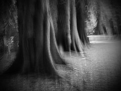 (Phil Burns) Tags: park trees ireland bw blur tree forest gimp olympus trunk zuiko icm boyle e5 roscommon zd 1454mm