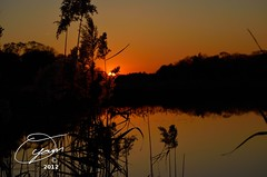 oyaMAM_20121117-172322e - Setting Sun thru the Reeds (MichaelAPMayo) Tags: nature photography riverhead oyamam oyamaleahcim