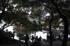Flickr photo/山の上 (EL.F) Tags: japan photography candid sigma snap 紅葉 自然 日常 単焦点