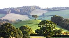 One Tree Hill (tom_2014) Tags: uk light england sunlight tree canon landscape countryside cool view scenic landmark scene powershot devon pasture shire devonshire westcountry crediton southwestengland sx1ls