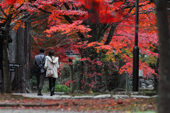 (Shibazo) Tags: autumn leaves kyoto