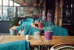 Something blue (e.kristina) Tags: blue flower film outside cafe purple chairs lavender tables