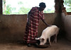 Jane Sebbi with one of her pigs (Bread for the World) Tags: women uganda agriculture kamuli may2011 lauraelizabethpohl janesebbi