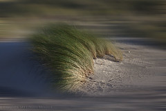 Stormy grass (Pieter Musterd) Tags: storm holland photoshop canon sand dunes nederland thenetherlands sable denhaag 5d gras duinen helm zand sturm kijkduin grasss musterd alsjehaarmaargoedzit pietermusterd canon5dmarkii