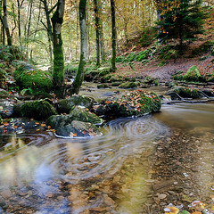 Autumn Inchewan Burn (TheNorthLight.co.uk (davidlangan)) Tags: autumn trees water october stream perthshire dunkeld birnam inchewan