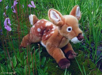 Photo - Fawn and Shooting Stars
