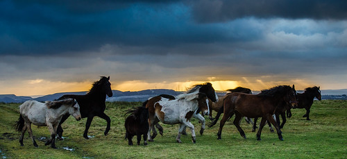 Movement ~ Explored (intrazome) sunset horses nature nikon d5100