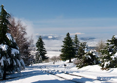 Willamette Valley Snow