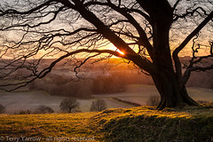 Minterne Sunset (Terry Yarrow) Tags: uk winter light sunset england tree silhouette canon landscape evening smoke atmosphere valley dorset sunburst contrejour possibles eos5d minternemagna littleminternehill