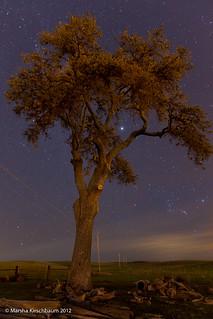Oak Tree Beneath the Stars