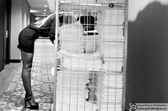 (Just a guy who likes to take pictures) Tags: city portrait urban bw en woman white black laura holland blancoynegro netherlands girl monochrome dutch face fashion rock female hair hotel photo und model europa europe shoot pumps foto dress photoshoot zwartwit feminine femme panty nederland thenetherlands towel tights skirt portrt hide blonde heels towels holanda shooting nl van frau portret mode der zwart wit weiss paysbas modell schwarz nylon vrouw flevoland stad rok almere niederlande zw gezicht flevo strumpfhose fotoshoot valk hakken antiportrait rokje