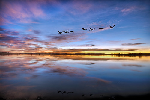 Pre-dawn twilight at Bosque del Apache by snowpeak, on Flickr