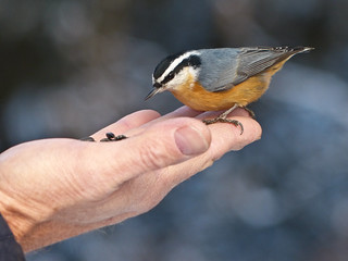 A bird in the hand is worth ...