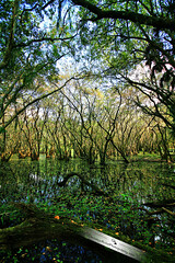 In the swamp... (Chrissy Avila Photography (cHrIsSy1554)) Tags: landscape photography florida myakka floridawildlife myakkariverstatepark southfloridawildlife bbphoto ©csquaredphotography chrissy1554 ©christinaavilaphotography ©chrissyavilaphotography wwwchrissyavilaphotographycom