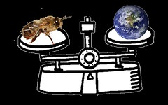 bee globe scale (Brian D Lacy) Tags: portland live bees beekeeping honeybees swarms brianlacy livehoneybees honeybeescom