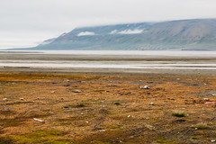 Arctic Tundra XIII (danielfoster437) Tags: adventure arctic arcticcircle arcticsummer arctictundra extremeterrain landscape mountain nature outdoors spitsbergen summer svalbard svalbardsummer terrain tundra wilderness