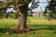 The Lightning Tree (chris@durham) Tags: kedleston hall derbyshire