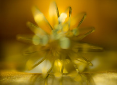 star dust  (explored) (janet.capling) Tags: macromondaystar macro light sparkle stardust star bokeh metal wow wisk