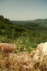Barre des Cevennes (www.JnyAroundTheWorld.com - Pictures & Travels) Tags: france cvennes massifcentral occitanie nature wilderness roadtrip outdoor canon jnyaroundtheworld jenniferlavoura fleur flore flora panoramic pointofview barredescevennes lozre gard