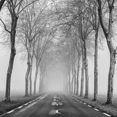 (Mat-S) Tags: road route brume brouillard tree trees platane planetree noiretblanc blackandwhite mist bugey rhonealpes