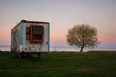 (Constanza Ge) Tags: puntaindio costa mar buenosaires atardecer abandonado sunset abandoned tree