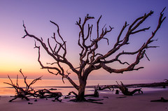 Jekyll Sunrise (Jon Ariel) Tags: driftwood beach jekyll island georgia usa sunrise water
