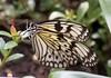 K46A8101 (Yvonne23021984) Tags: schmetterling butterfly hamm germany deutschland maxipark markro photography macrophotography canon canonphotography markofotografy canoneos7dmarkii insects insekten nature naturfotografie naturephotography closeup colorkey schmetterlinge butterflies