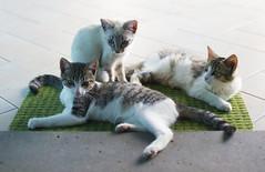 Zerbino di gatte. (___matzo___) Tags: animals animali cat gatti gatte cats gatto zerbino house home casa