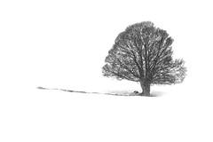 L'arbre sous la neige (Mamat151) Tags: tln arbre neige