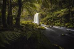 ([Benjamin Watson]) Tags: hopetounfalls hopetoun waterfall falls otways otwaynationalpark victoria australia river stream gully rainforest aire aireriver beechforest