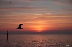 Al vuelo (lesxanes) Tags: amanecer sunrise cielo sky nubes clouds morning maana seascape asturias asturies spain mar sea vuelo gaviota seagul canon70d