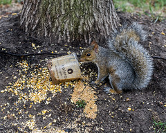 Aggie Ring Feeds a Squirrel (flickr4jazz) Tags: shrewsbury newjersey unitedstates us