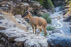 DSC_1345 (Dan Kistler) Tags: samaria gorge hiking rocks sea adventure principia college travel greece