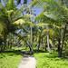 Il sentiero attraversa molte palme da cocco